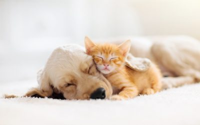 Puppies Vs Kittens | Which Is Cuter?