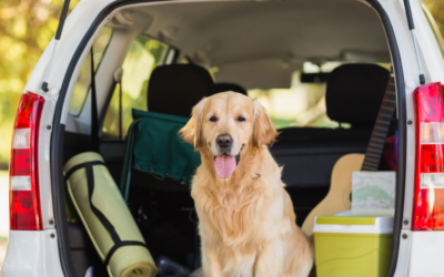 Top Tips For Travelling With Dogs