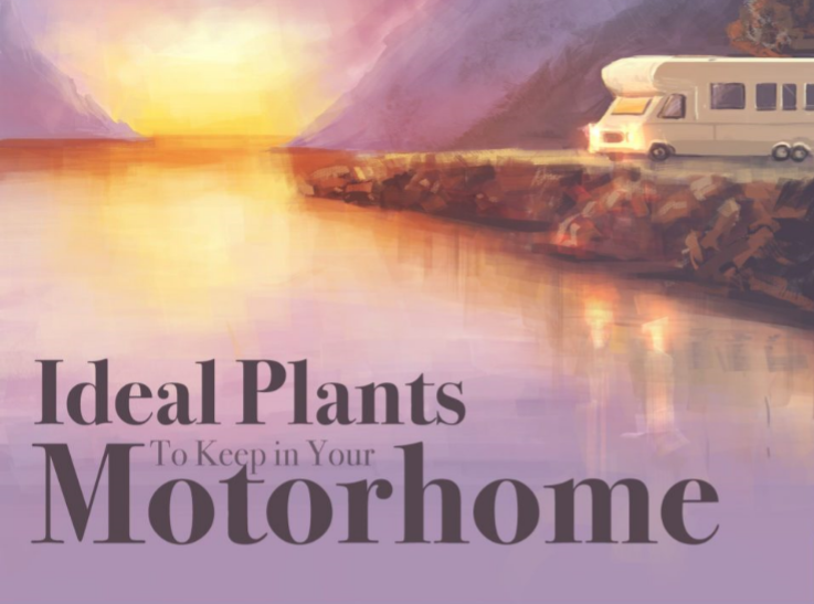 Plant life inside your motorhome!