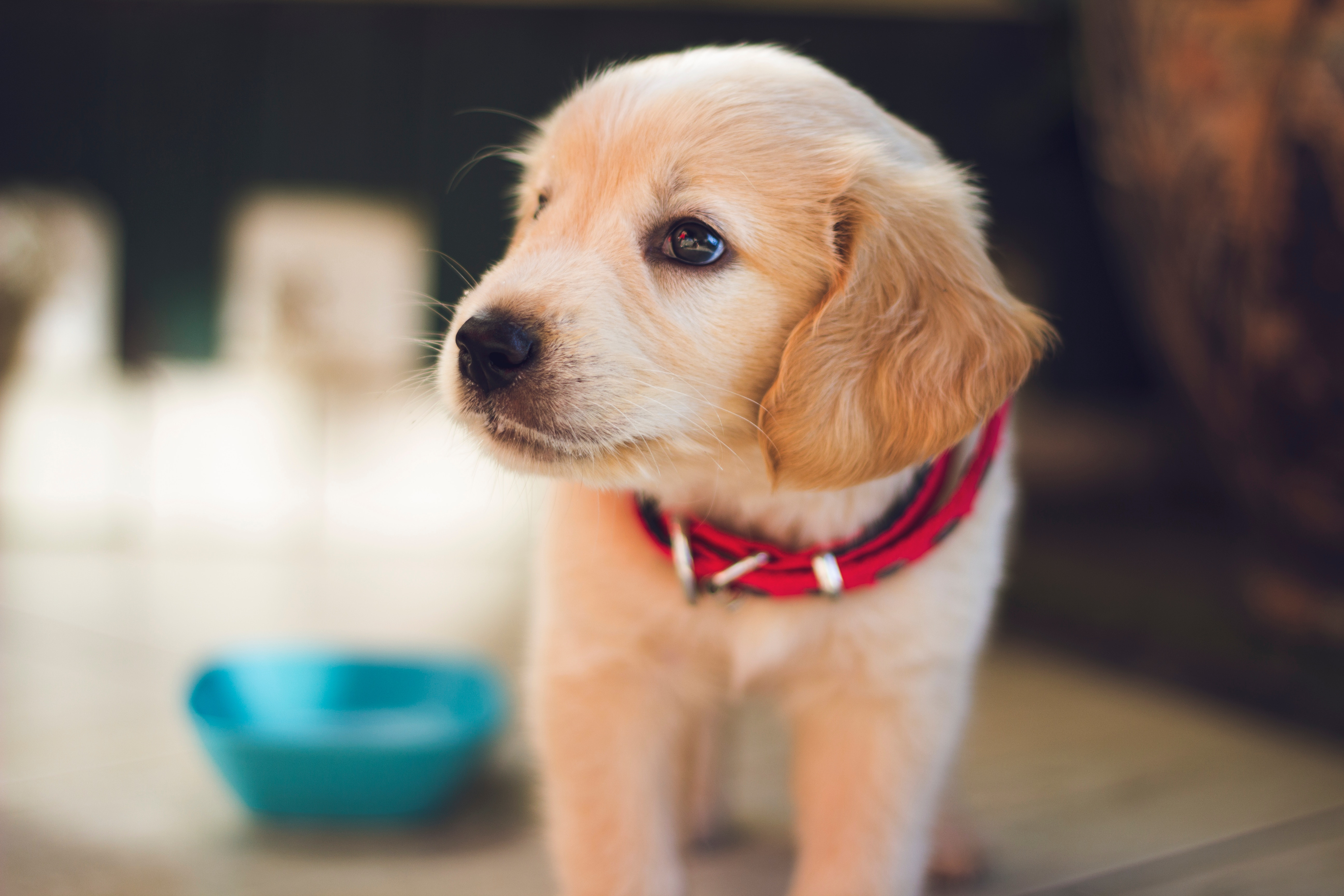 "Birth cohort study (""Generation Pup"") of pet dogs is underway"