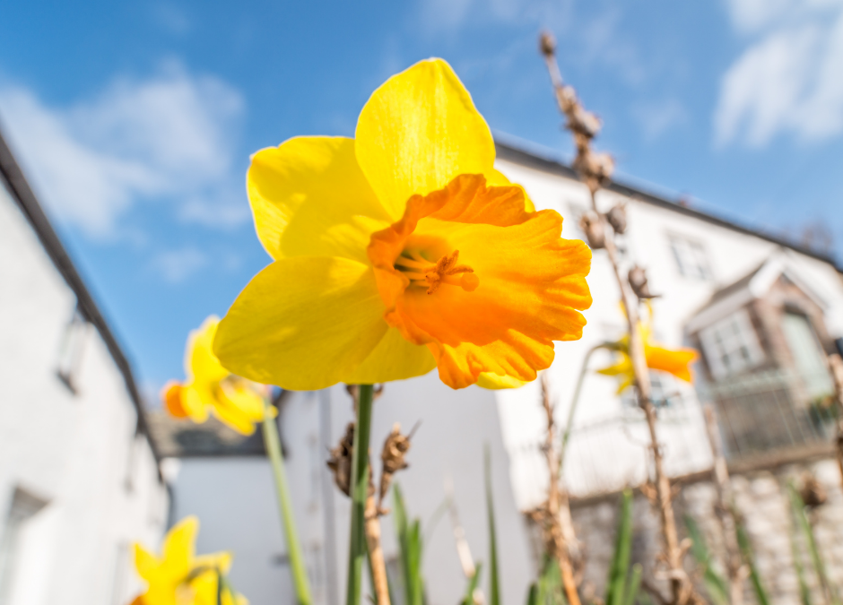 Spring Checklist For Your Home