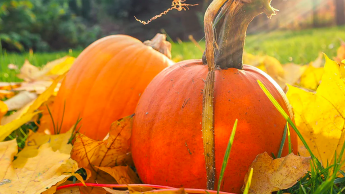 6 Important Autumn and Winter Gardening Tips You Should Know About