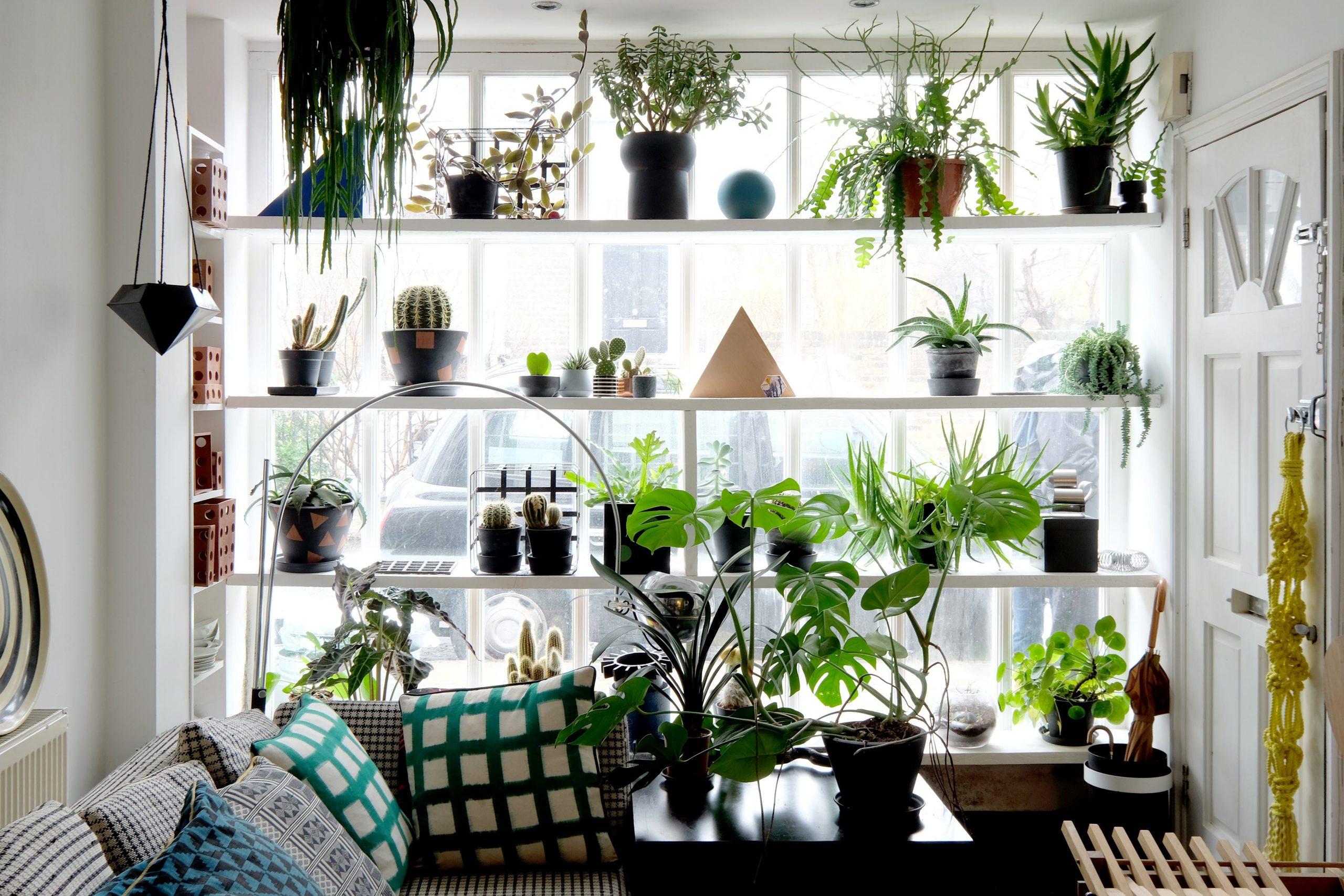 Apartment windowsill accessories
