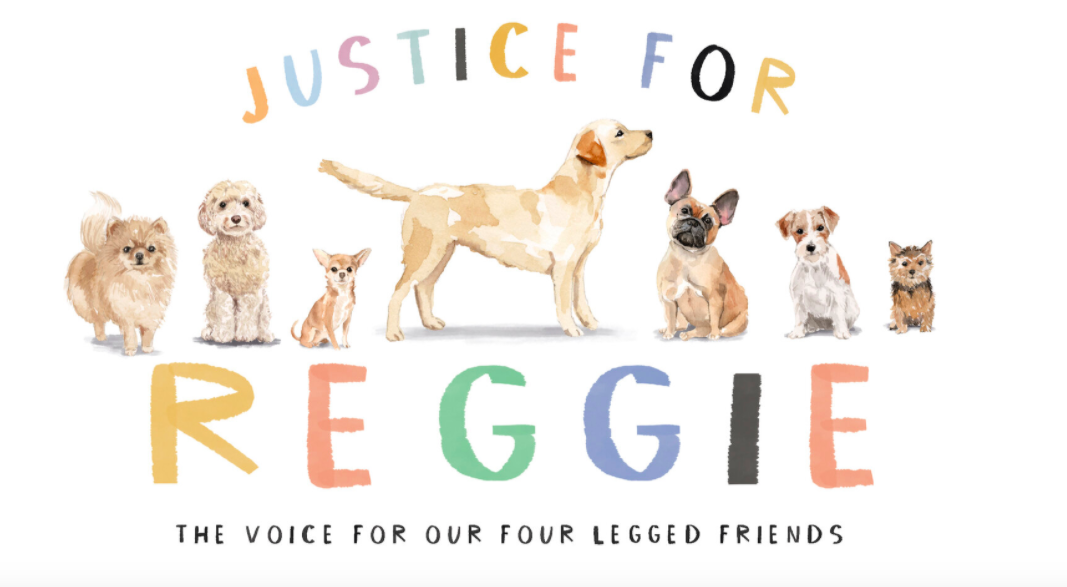 Justice for Reggie campaign launches unprecedented 'Animal Welfare Alliance'  for the protection of pets and buyers online