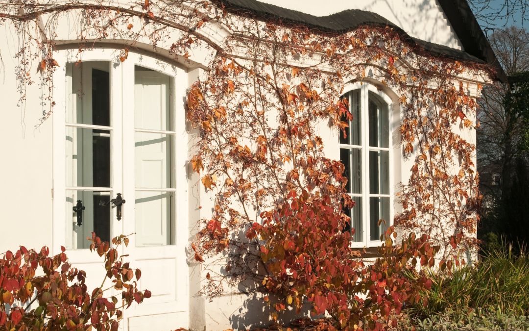 Home maintenance tasks to do this Autumn!